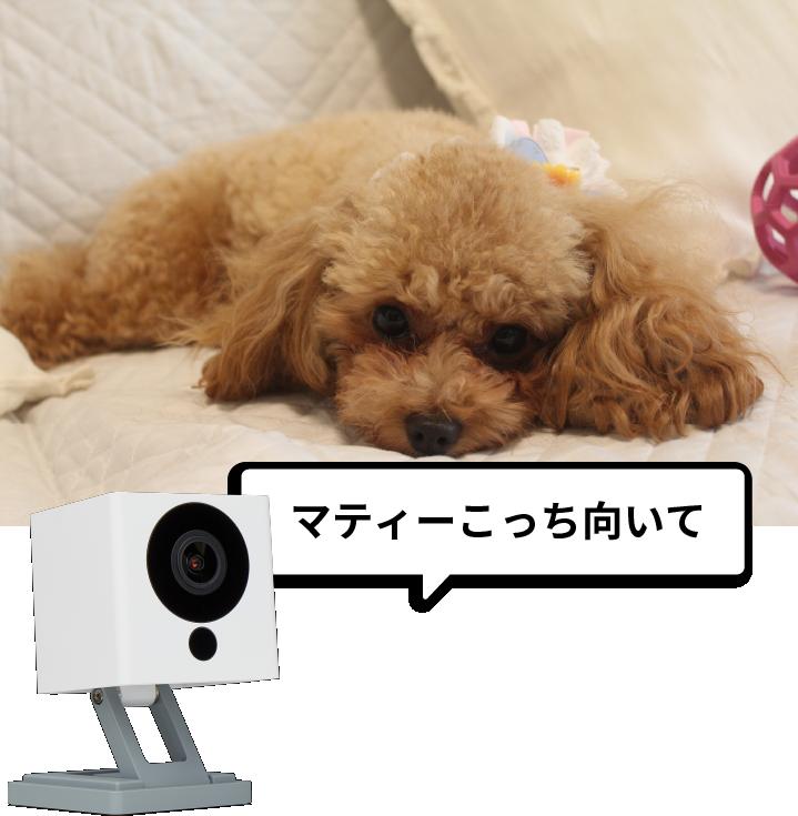 スマホアプリからカメラに声が送れる
